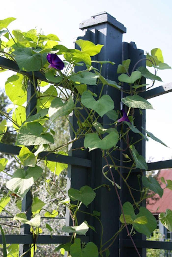 andrea-filippone-edible-garden-potager-fence-detail-gardenista