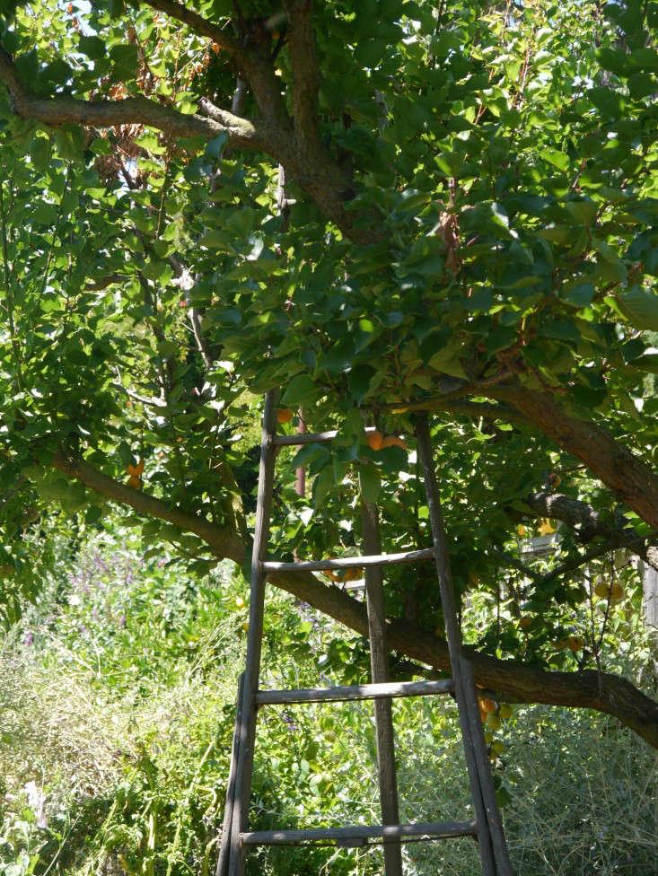 apricottreegardenista.sylvialinsteadt
