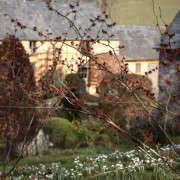 arne-maynard-garden-wales-snowdrops-witch-hazel-gardenista