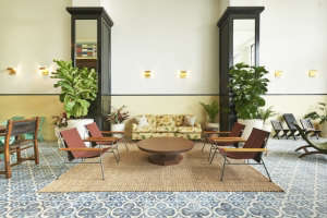 Ace Hotel Panama fiddle leaf fig tree ; Gardenista