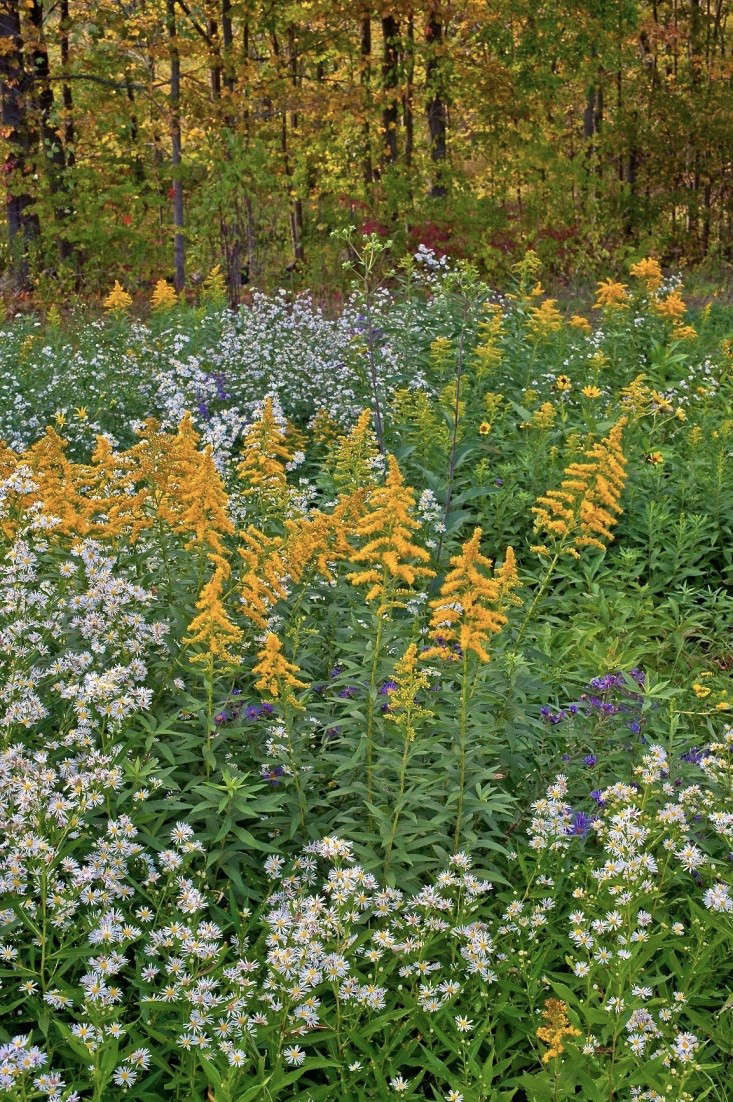 autumn-fall-colorful-garden-karen-bussolini-gardenista-1
