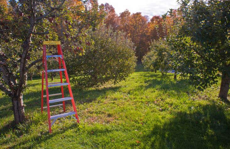 autumn-fall-colorful-garden-karen-bussolini-gardenista-2