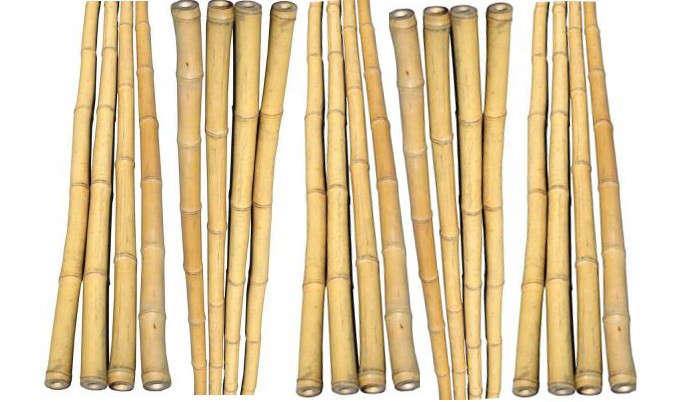 bamboo-gardenista