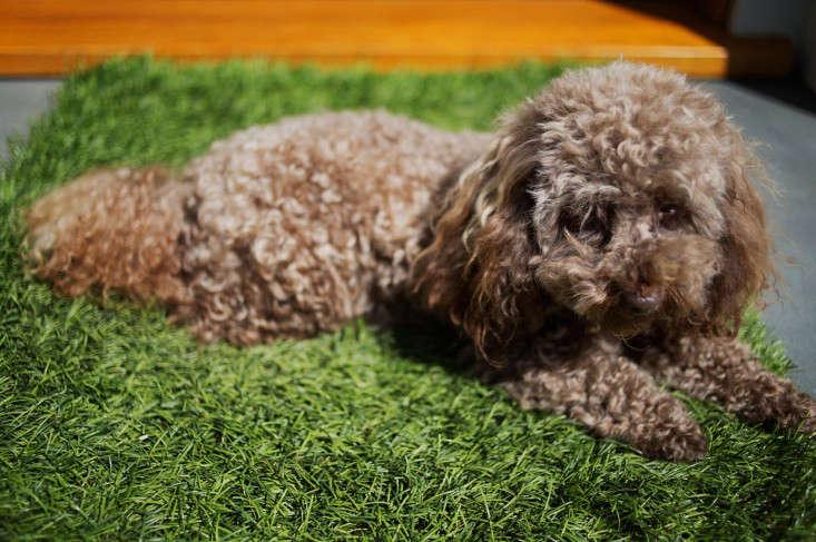 barbara-chambers-coco-dog-gardenista