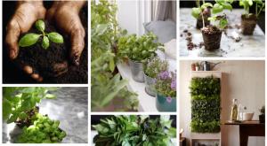 Gardenista Field Guide: Basil Herb