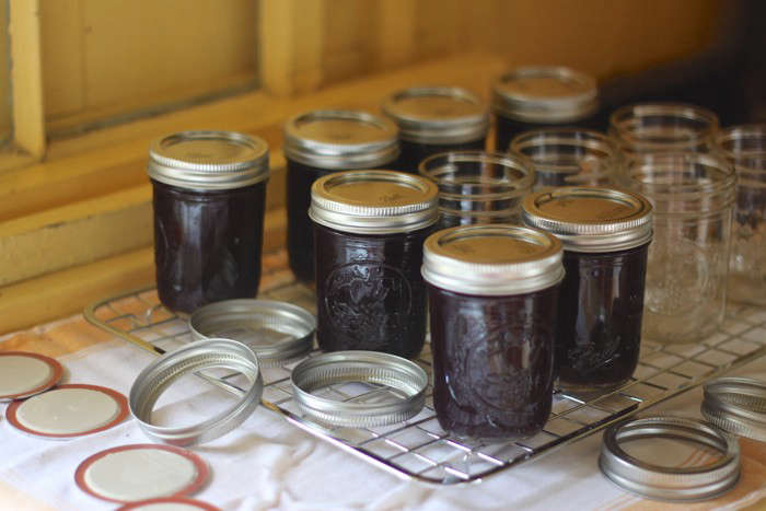 beach plum jam in jars