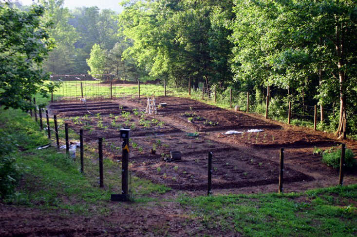 A neat rectangular kitchen garden, divided into a checkerboard of planting beds sits against a rolling green backdrop.