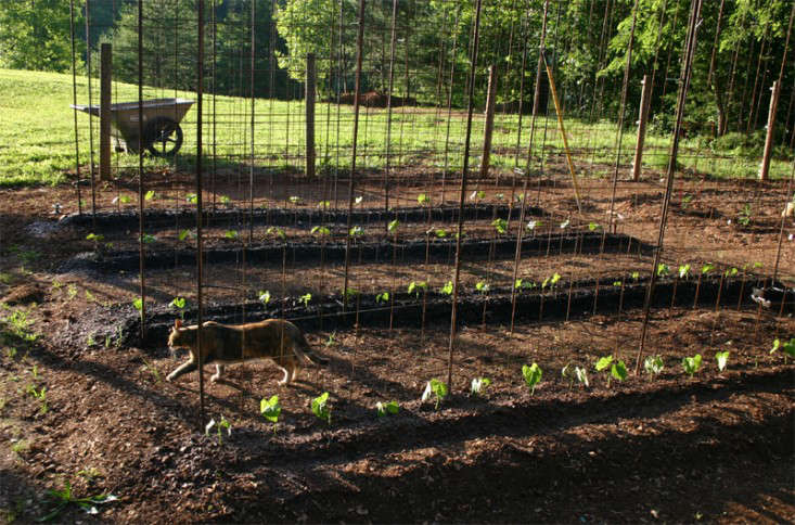 A few days after planting, &#8\2\20;a few of the beans have grabbed onto the bean arbor,&#8\2\2\1; April says.