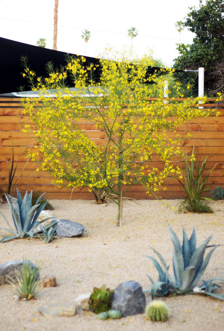 before-and-after-front-yard-landscaping-brick-house-gardenista-5