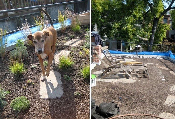 before-and-after-roof-garden-brooklyn