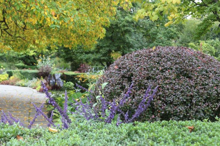 berberisball1-marie-viljoen-gardenista