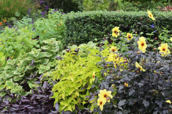 black-marie-viljoen-gardenista