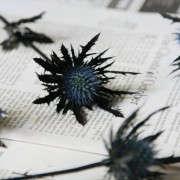black-thistles-4-erin-boyle-gardenista