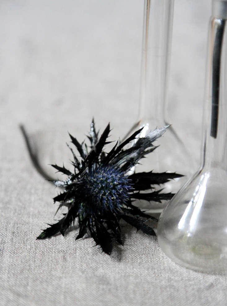 black-thistles-7-erin-boyle-gardenista