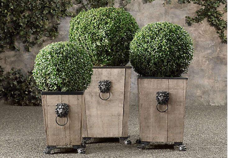boxwood-gall-topiary-restoration-hardware-gardenista