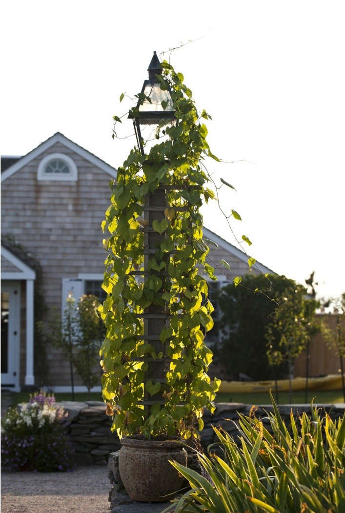brewster-outdoor-light-with-vine
