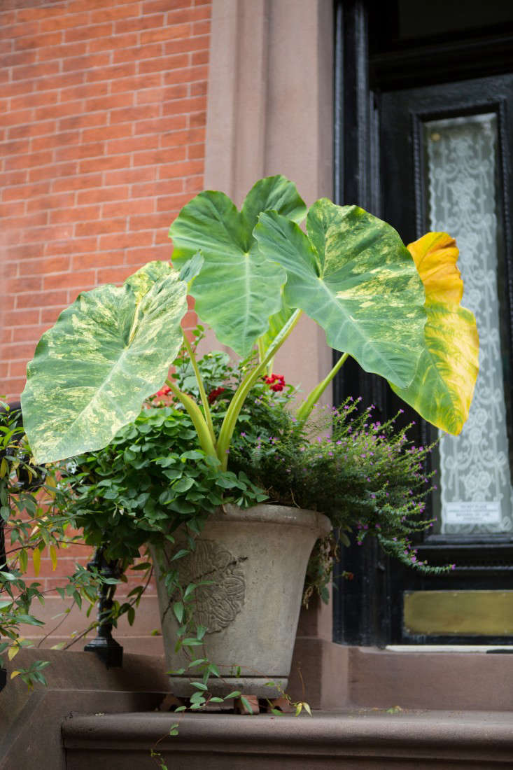 brooklyn-heights-douglas-lyle-thompson-gardenista-1696
