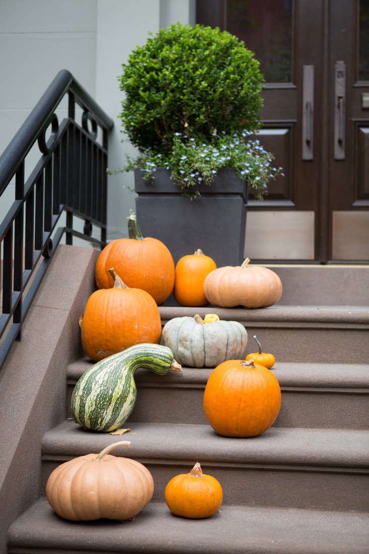brooklyn-heights-douglas-lyle-thompson-gardenista-1718