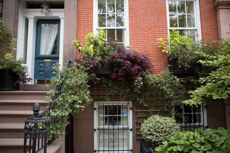 brooklyn-heights-douglas-lyle-thompson-gardenista-1782