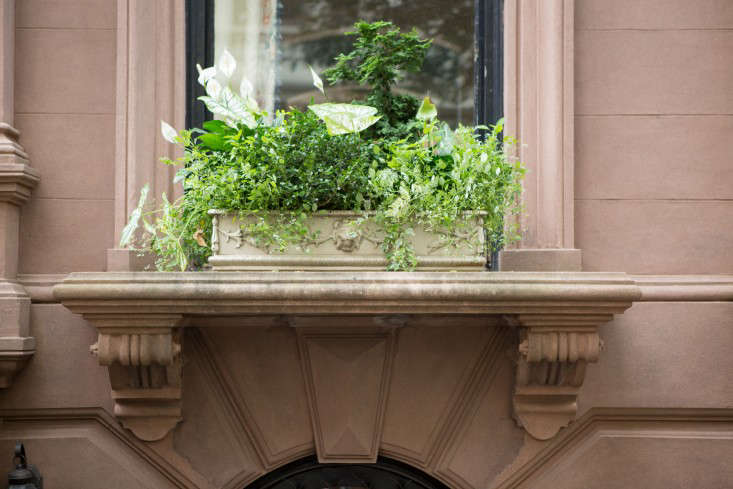 brooklyn-heights-douglas-lyle-thompson-gardenista-1841