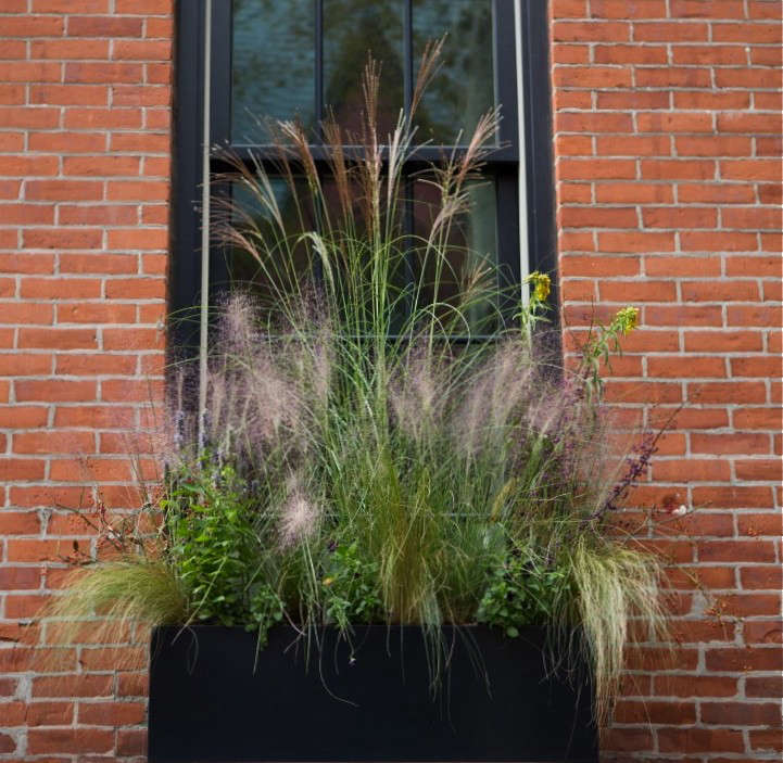 brooklyn-heights-halloween-grasses-window-box-gardenista