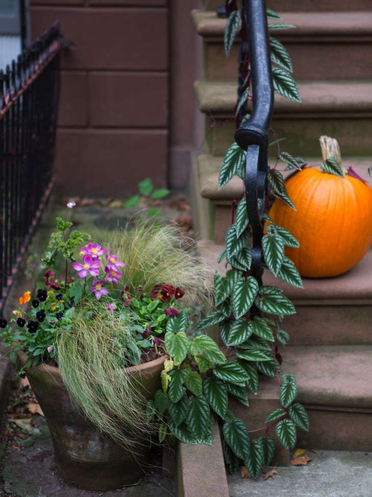 brooklyn-heights-vine-pumpkin-stoop-container plants-gardenista