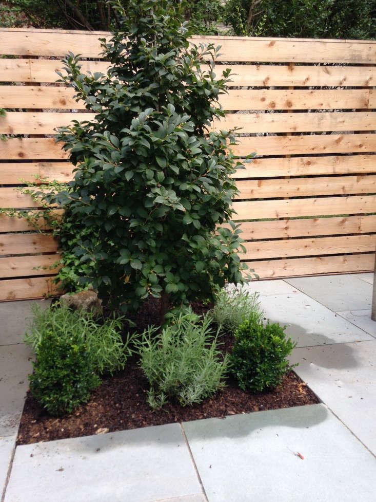 brooklyn-prospect-townhouse-garden-stewartia-gardenista