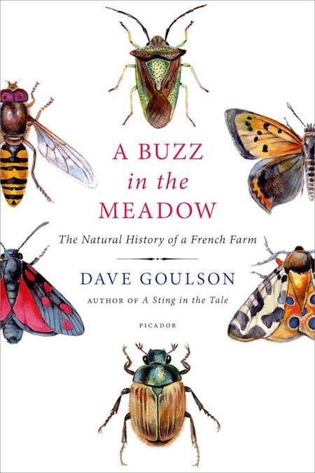 buzz-in-the-meadow-gardenista