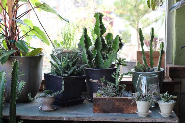 cactus-solabee-gardenista