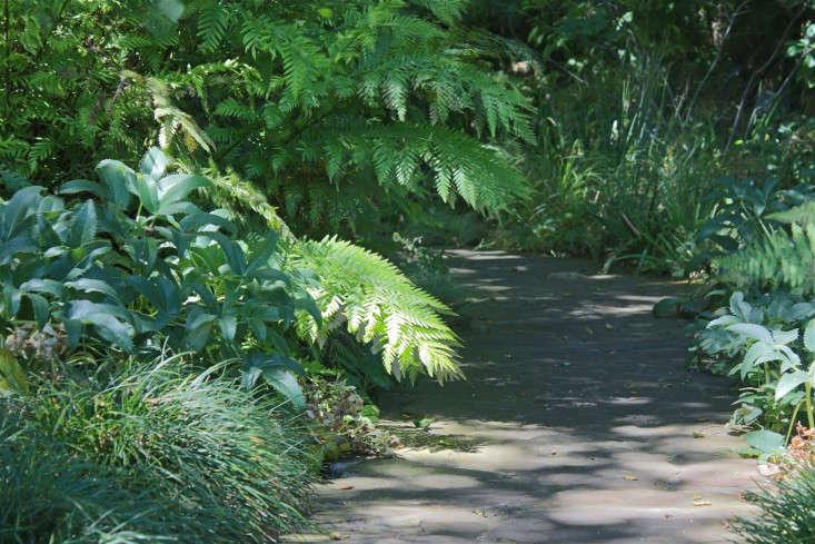 california-gardens-sunset-campus-thomas-church-ferns-gardenista