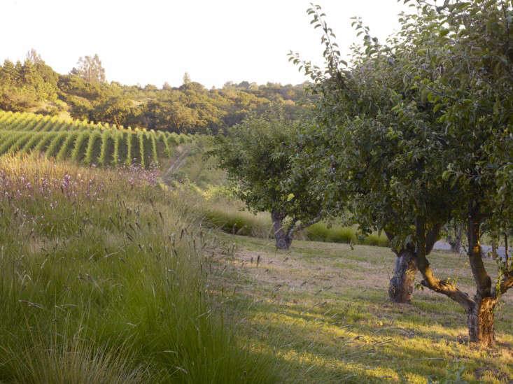 california-vineyard-garden-andrea-cochran-grasses-gardenista