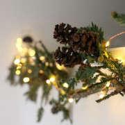 chartreuse-christmas-2-erin-boyle-gardenista