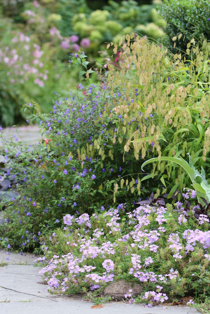 chasmanthium-marie-viljoen-gardenista