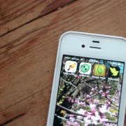 citizen-scientist-apps-erin-boyle-2-gardenista