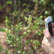 citizen-scientist-apps-erin-boyle-4-gardenista