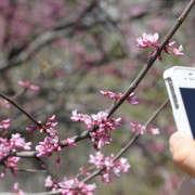 citizen-scientist-apps-erin-boyle-5-gardenista