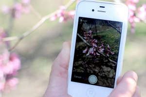 garden tech iphone citizen scientist apps | gardenista