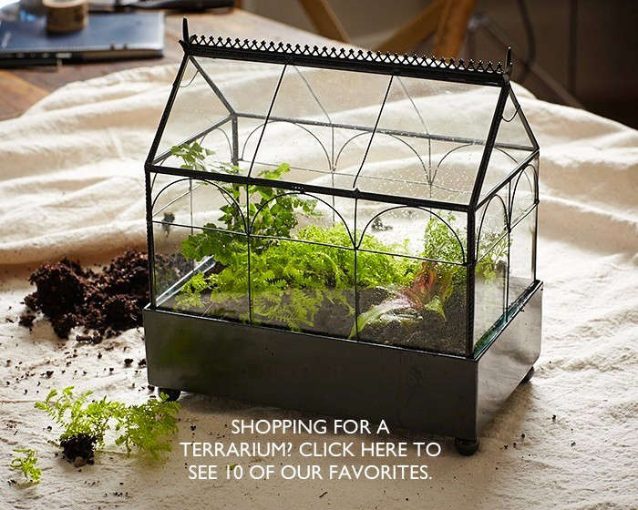click her to see 10 terrariums l Gardenista