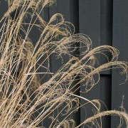 close-up-of-grasses-susan-cohan-gardens