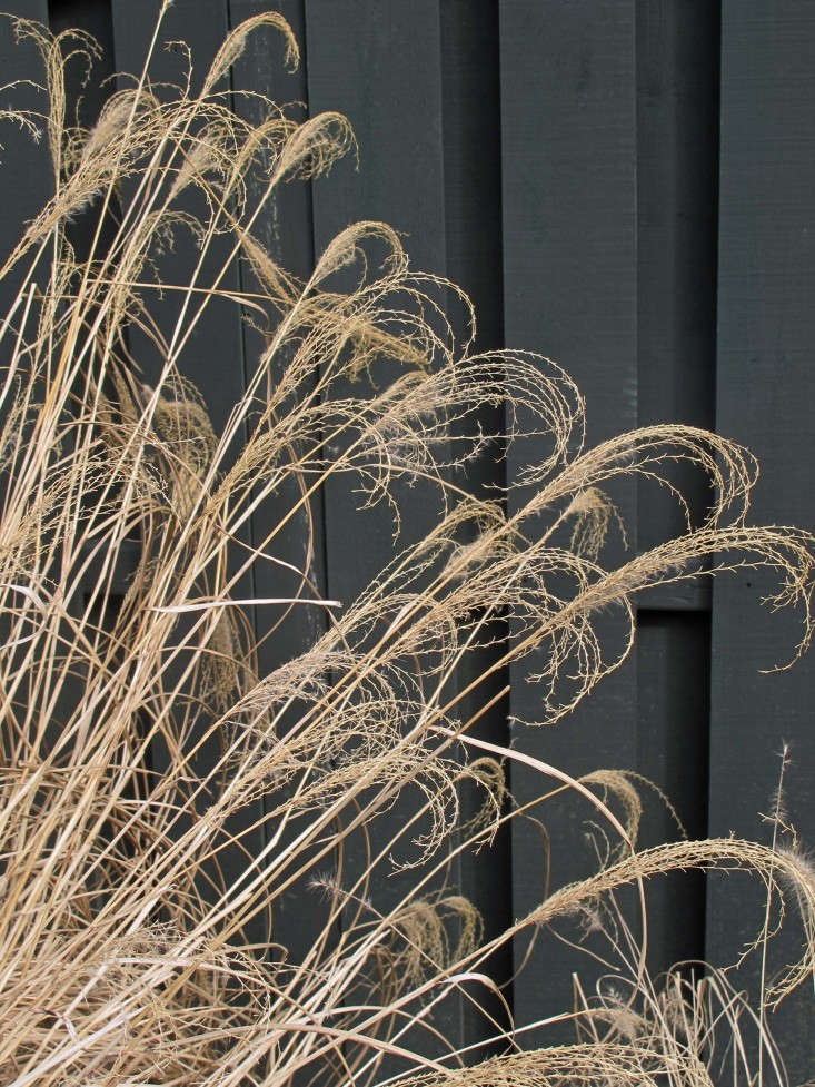 close-up-of-grasses-susan-cohan-gardens