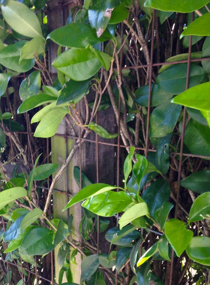 closeup-hog-wire-fence-gardenista