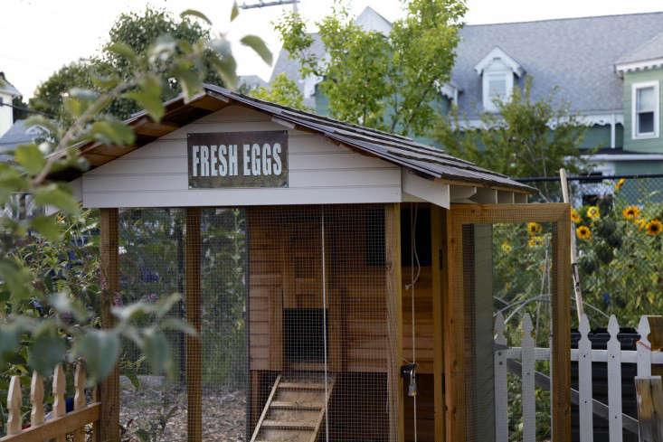 cluck-urban-farm-providence-chickens-christine-chitnis-gardenista-2