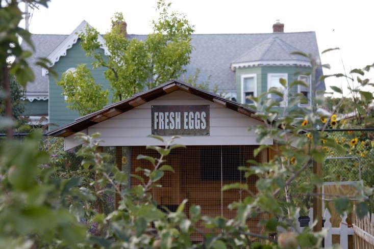 cluck-urban-farm-providence-chickens-christine-chitnis-gardenista-3