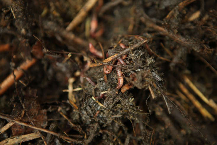 compost-worms-2