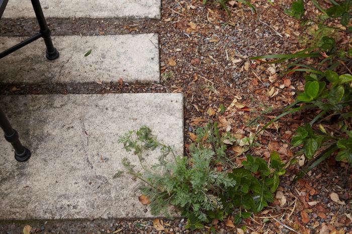concrete-pavers-san-francisco-garden-gardenista