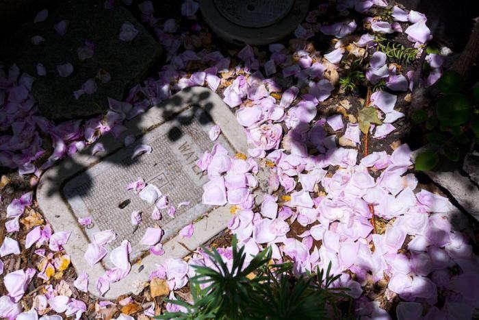 confetti_petals-roses-gardenista