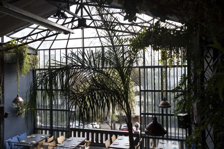 conservatory at romita restaurant in mexico city by mimi giboin for gardenista