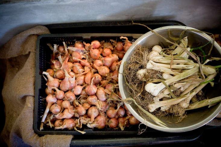 cookhouse at kurtwood farms shallots and leeks