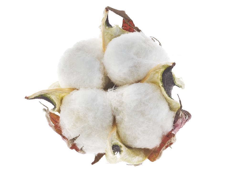 cotton-seeing-seeds-gardenista