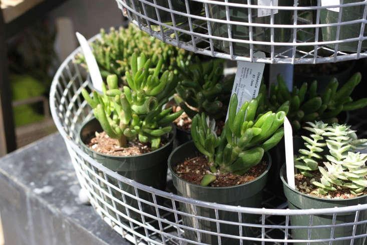 9 Secrets To Growing Succulents Indoors Gardenista
